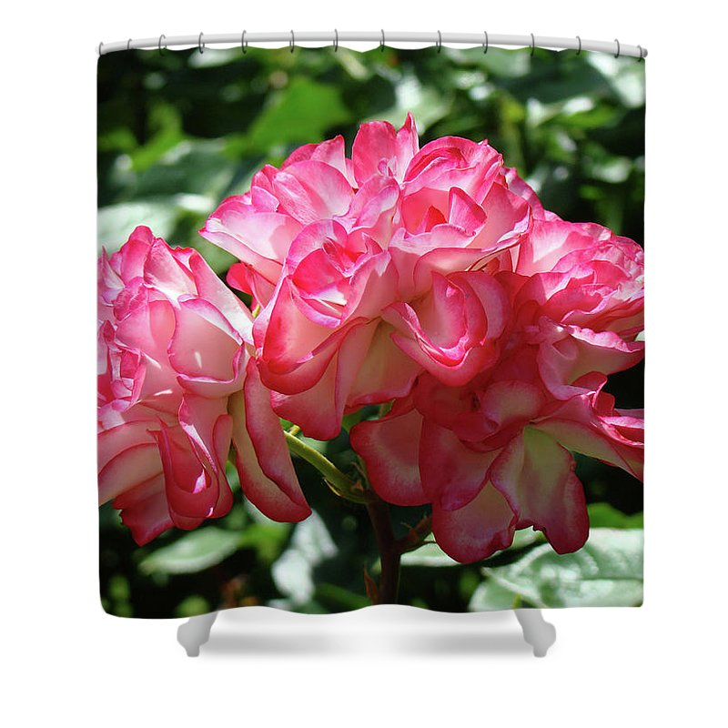 Rose Shower Curtain featuring the photograph Roses Bouquet Pink White Rose Flowers 2 Rose Garden Baslee Troutman by Baslee Troutman