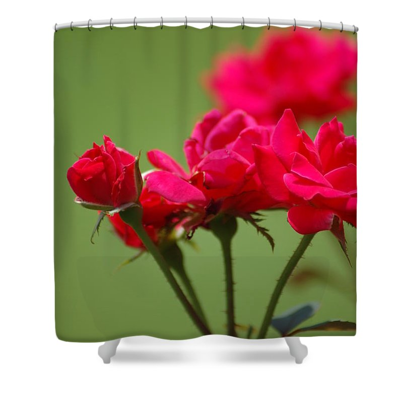 Roses Shower Curtain featuring the photograph Roses by Donna Bentley
