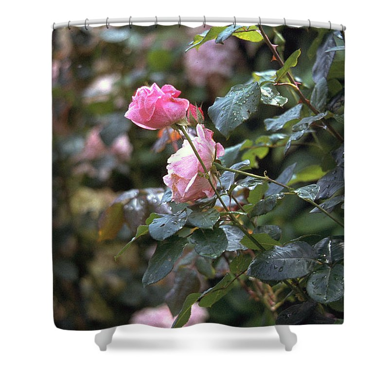 Roses Shower Curtain featuring the photograph Roses by Flavia Westerwelle