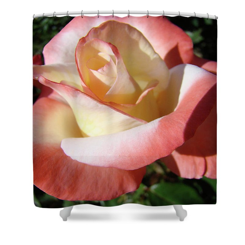 Rose Shower Curtain featuring the photograph Roses Pink Creamy White Rose Garden 5 Fine Art Prints Baslee Troutman by Baslee Troutman