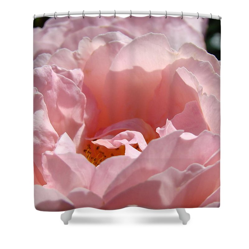 Rose Shower Curtain featuring the photograph Roses Pink Rose Flower 2 Rose Garden Art Baslee Troutman Collection by Baslee Troutman