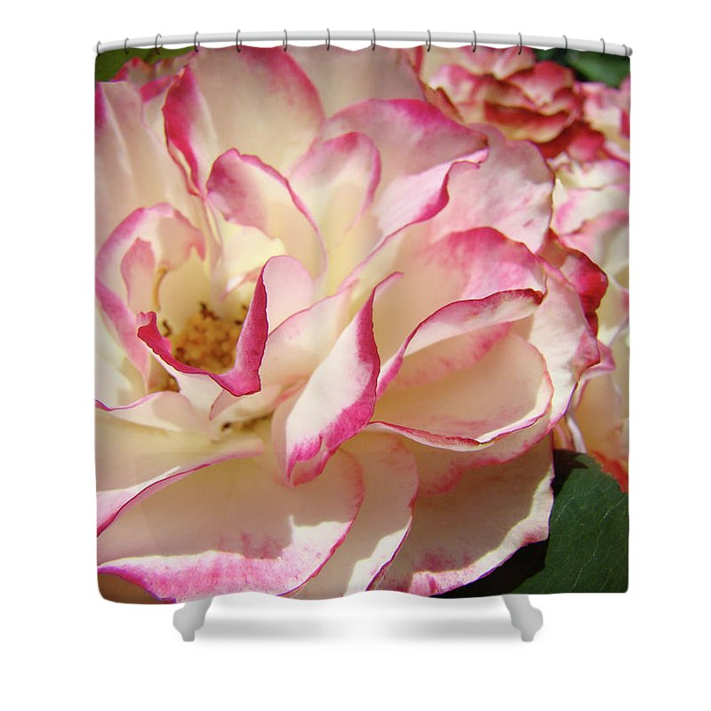 Rose Shower Curtain featuring the photograph Roses Pink White Rose Flowers 4 Rose Garden Artwork Baslee Troutman by Baslee Troutman