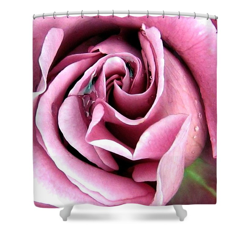 Romantic Shower Curtain featuring the photograph Roses Roses by Will Borden