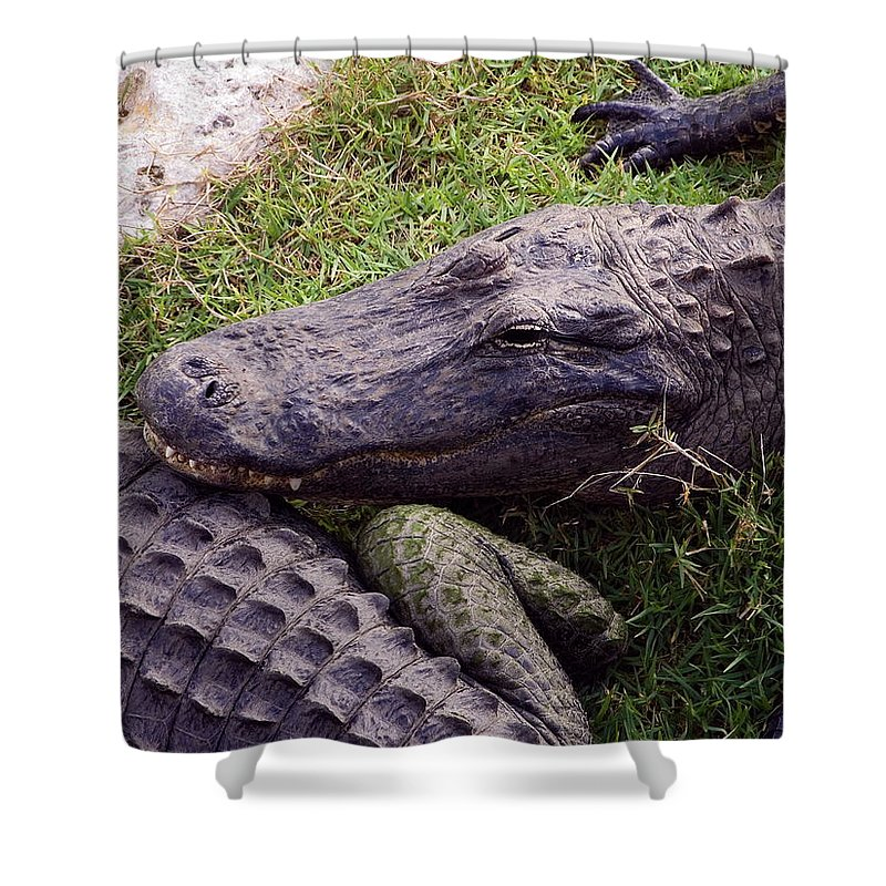 American Alligators Shower Curtain featuring the photograph Rough Skin by Sally Weigand