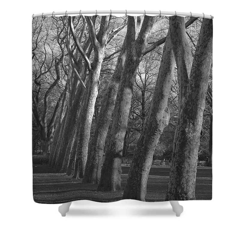 Trees Shower Curtain featuring the photograph Row Trees by Henri Irizarri