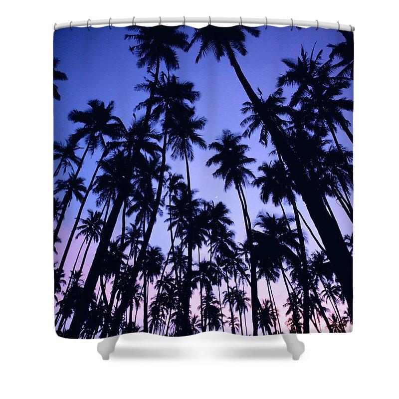 Allan Seiden Shower Curtain featuring the photograph Royal Palm Grove by Allan Seiden - Printscapes