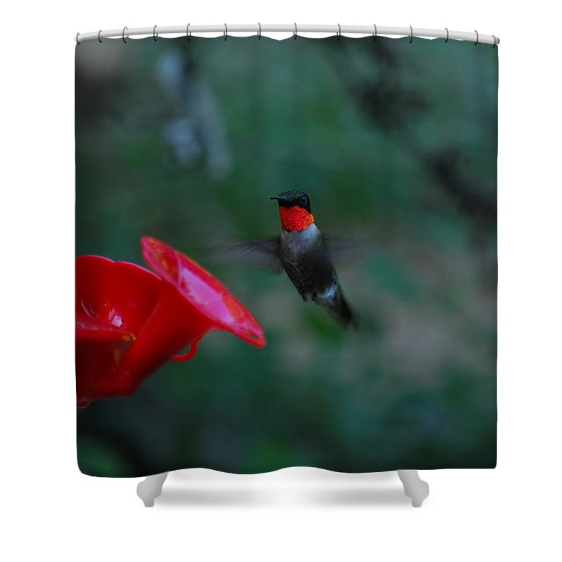 Hummingbird Shower Curtain featuring the photograph Ruby by Lori Tambakis