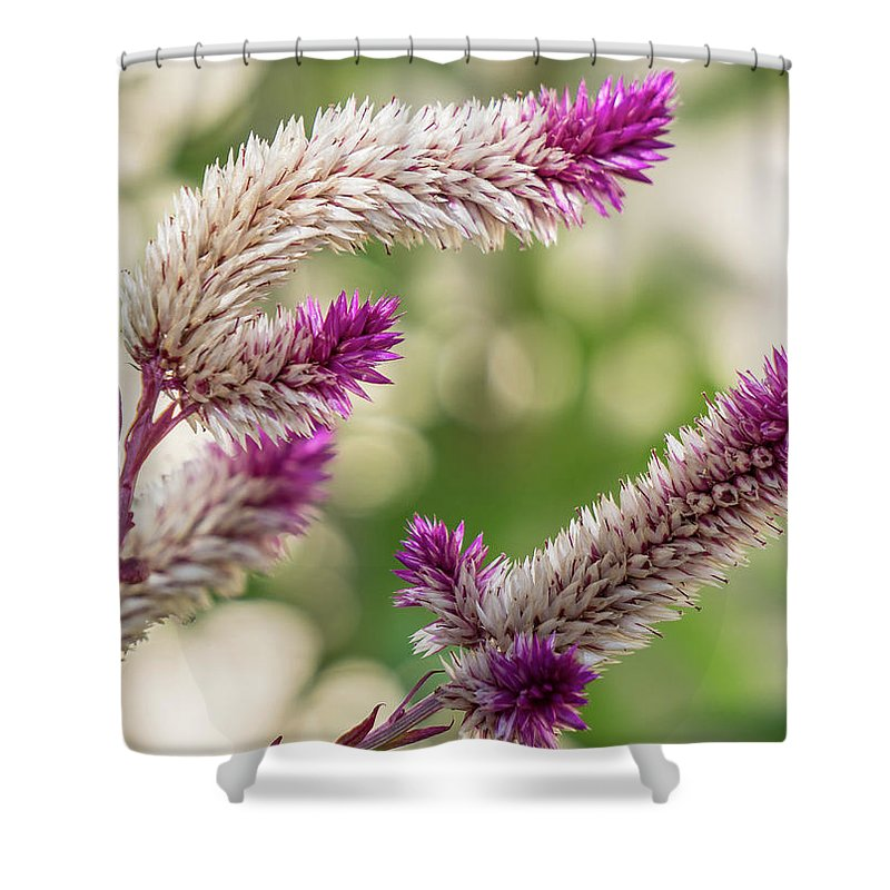 Florida Shower Curtain featuring the photograph Ruby Parfait Celosia by Jane Luxton
