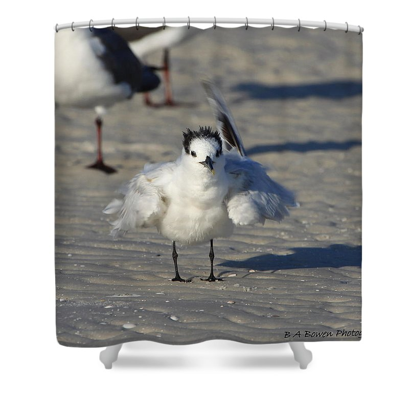 Gull Tern Shower Curtain featuring the photograph Ruffled Feathers by Barbara Bowen