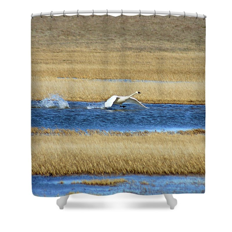 Swan Shower Curtain featuring the photograph Running On Water by Anthony Jones