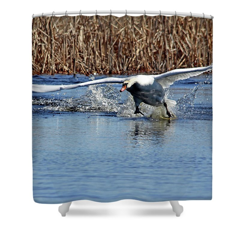 Mute Swan Shower Curtain featuring the photograph Running On Water by Debbie Oppermann