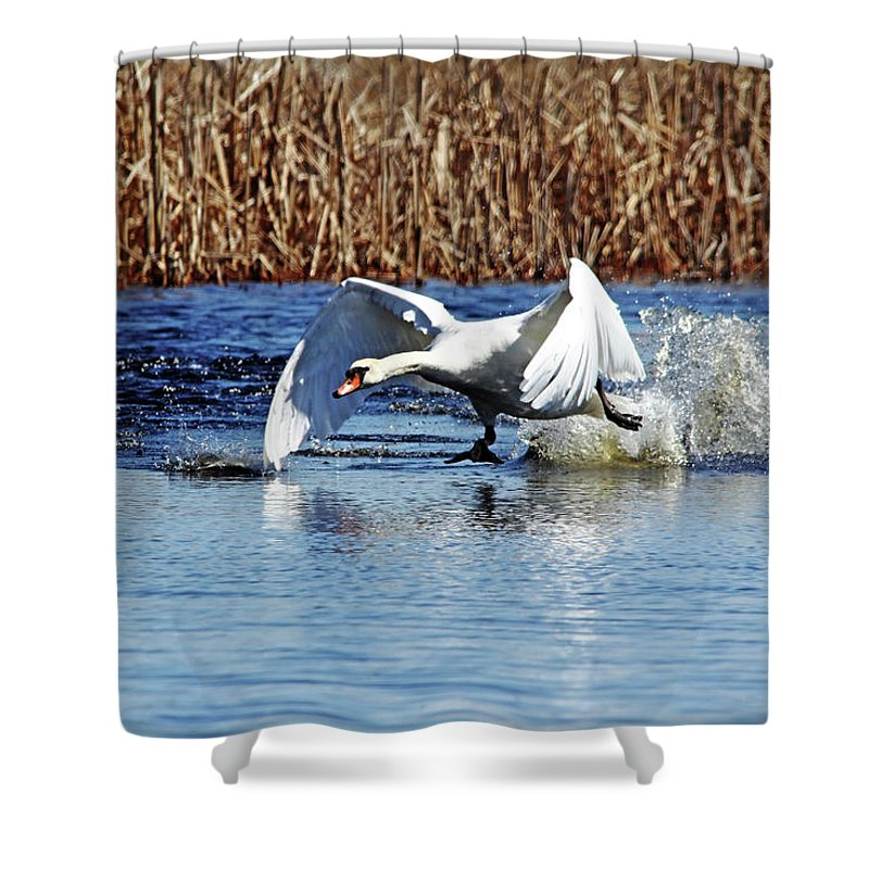 Mute Swan Shower Curtain featuring the photograph Running On Water I by Debbie Oppermann
