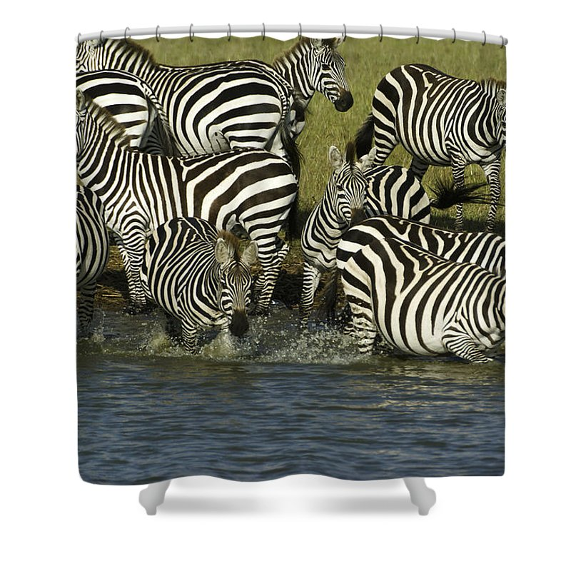 Africa Shower Curtain featuring the photograph Rush To Water by Michele Burgess