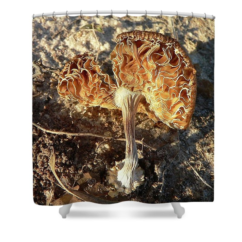 Mushroom Shower Curtain featuring the photograph Rusty Ribbons by Al Powell Photography USA