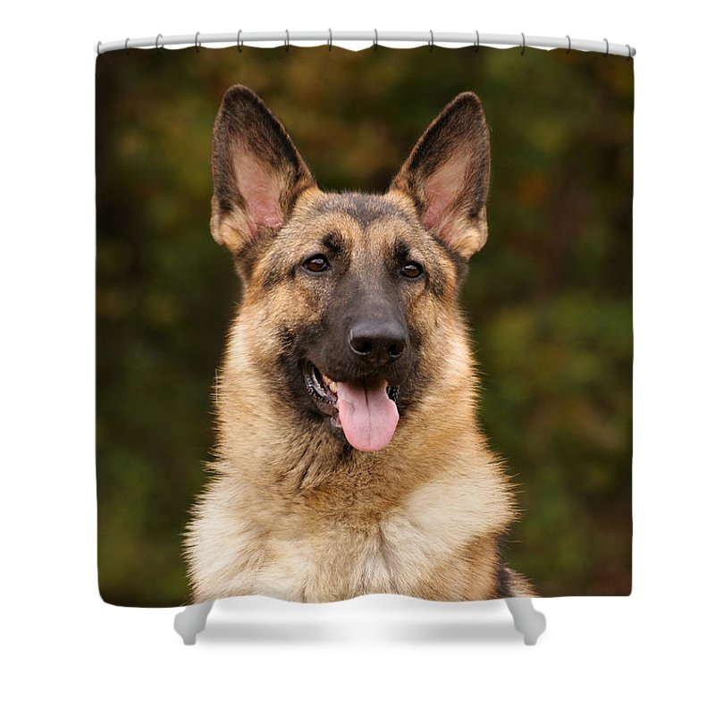 German Shepherd Dog Shower Curtain featuring the photograph Sable German Shepherd by Sandy Keeton