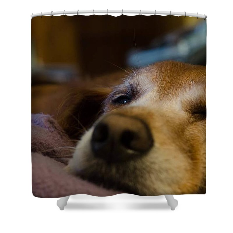 Dog Shower Curtain featuring the photograph Sad Dog by Porter Slice