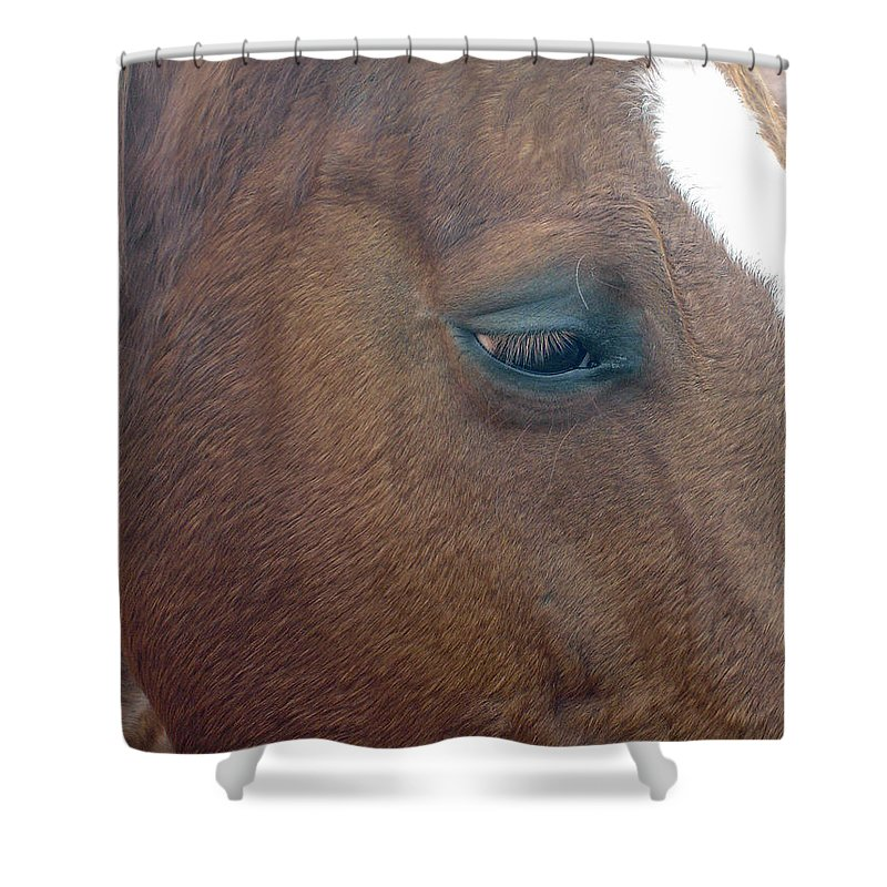 Horse Shower Curtain featuring the photograph Sad Eyed by Shelley Jones