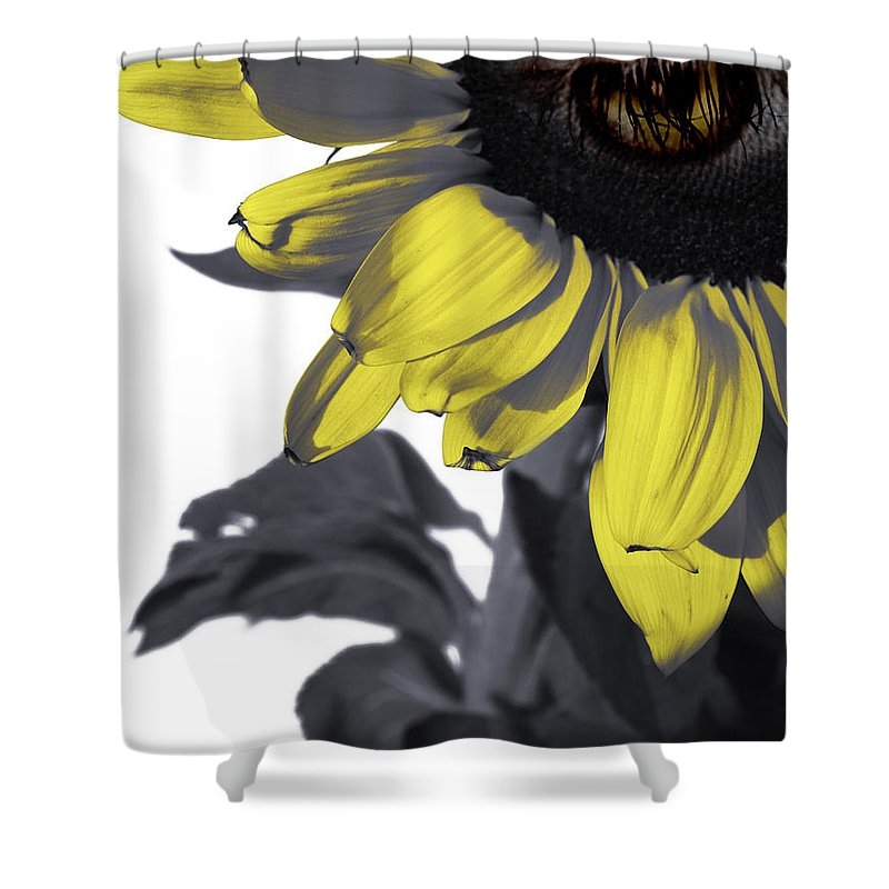 Sad Shower Curtain featuring the photograph Sad Sunflower by Kelly Jade King