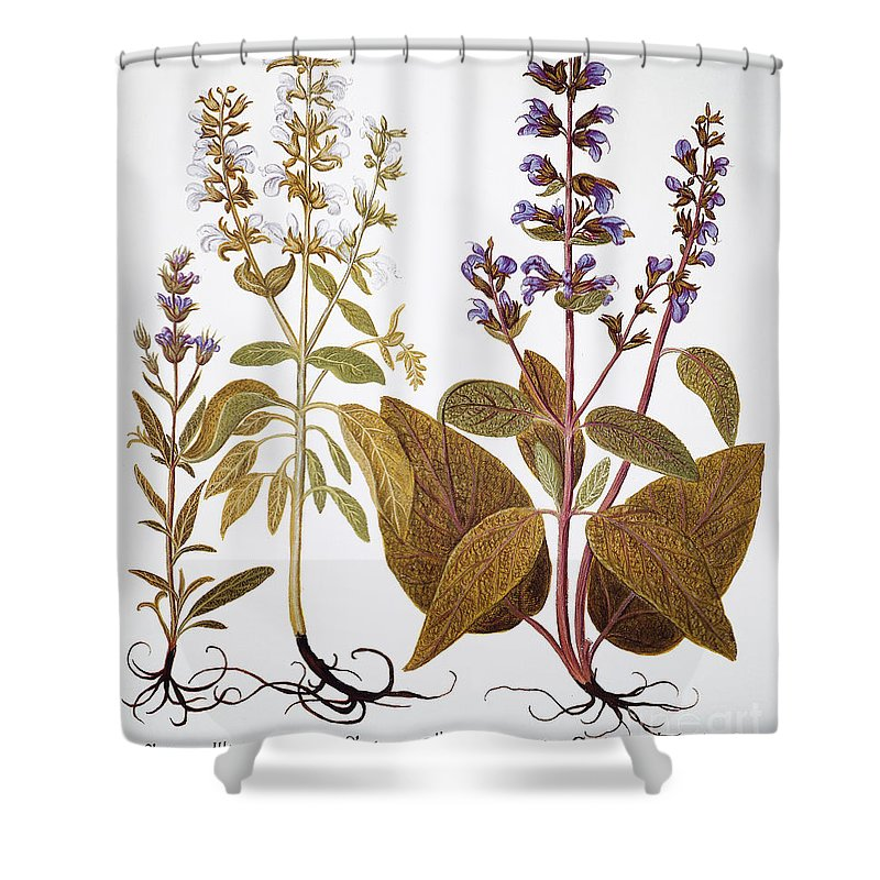 1613 Shower Curtain featuring the photograph Sage, 1613 by Granger