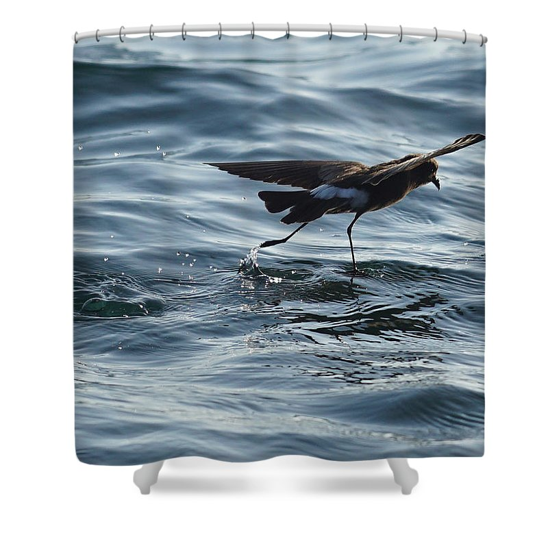 Shower Curtain featuring the photograph Saint Peter by Diego Paredes