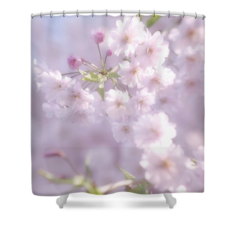 Cherry Blossoms Shower Curtain featuring the photograph Sakura Trees by Luv Photography