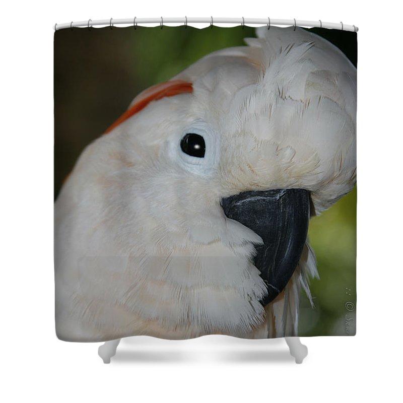 Aloha Shower Curtain featuring the photograph Salmon Crested Cockatoo by Sharon Mau