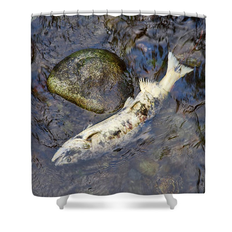 Salmon Shower Curtain featuring the photograph Salmon Run by Louise Heusinkveld