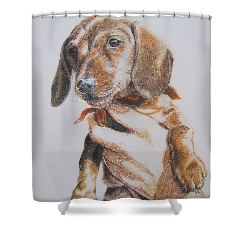 Puppy Shower Curtain featuring the drawing Sambo by Karen Ilari