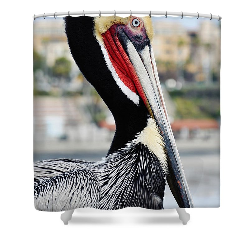 Pelican Shower Curtain featuring the photograph San Diego Pelican by Kyle Hanson
