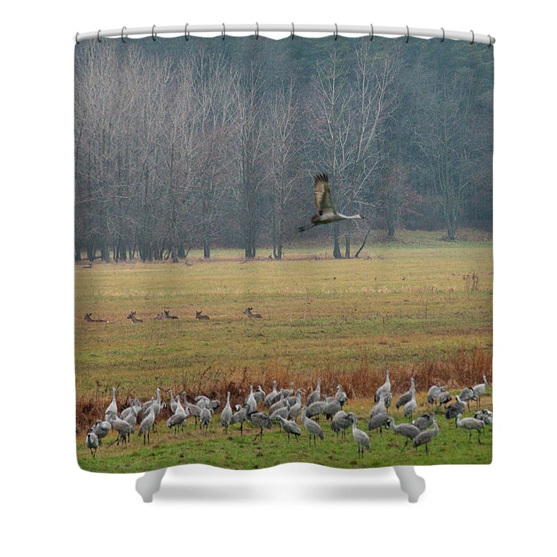 Birds Shower Curtain featuring the photograph Sand Hill Crane Migration by David Arment