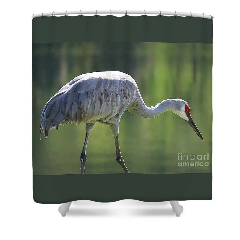 Bird Shower Curtain featuring the photograph Sandhill And Green Pond by Carol Groenen