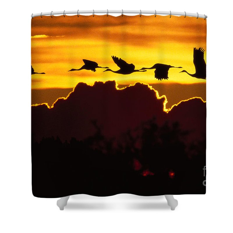 Above Shower Curtain featuring the photograph Sandhill Crane At Sunset by John Hyde - Printscapes