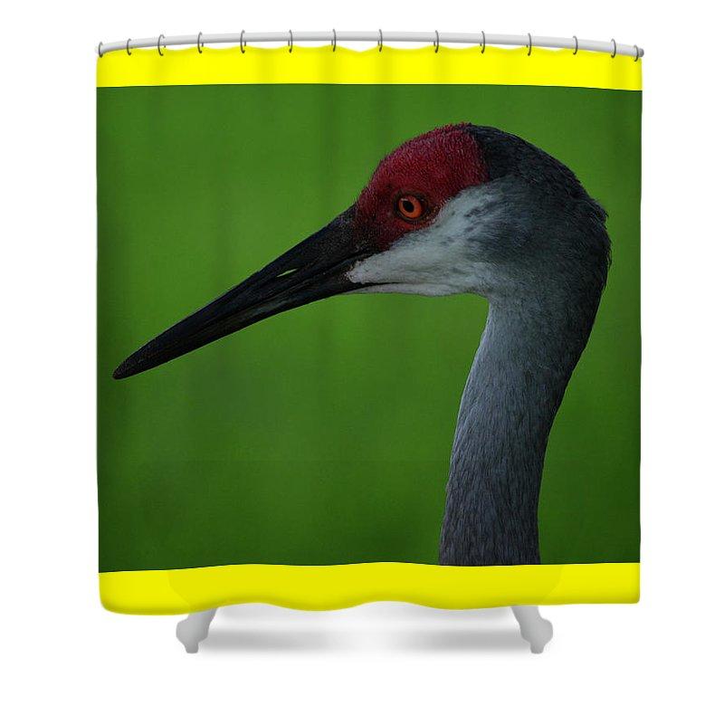 Sandhill Crane Shower Curtain featuring the photograph Sandhill Crane by Don Columbus