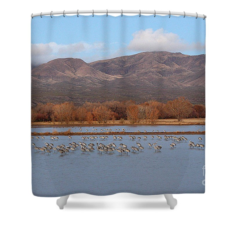 Sandhill Crane Shower Curtain featuring the photograph Sandhill Cranes Beneath The Mountains Of New Mexico by Max Allen