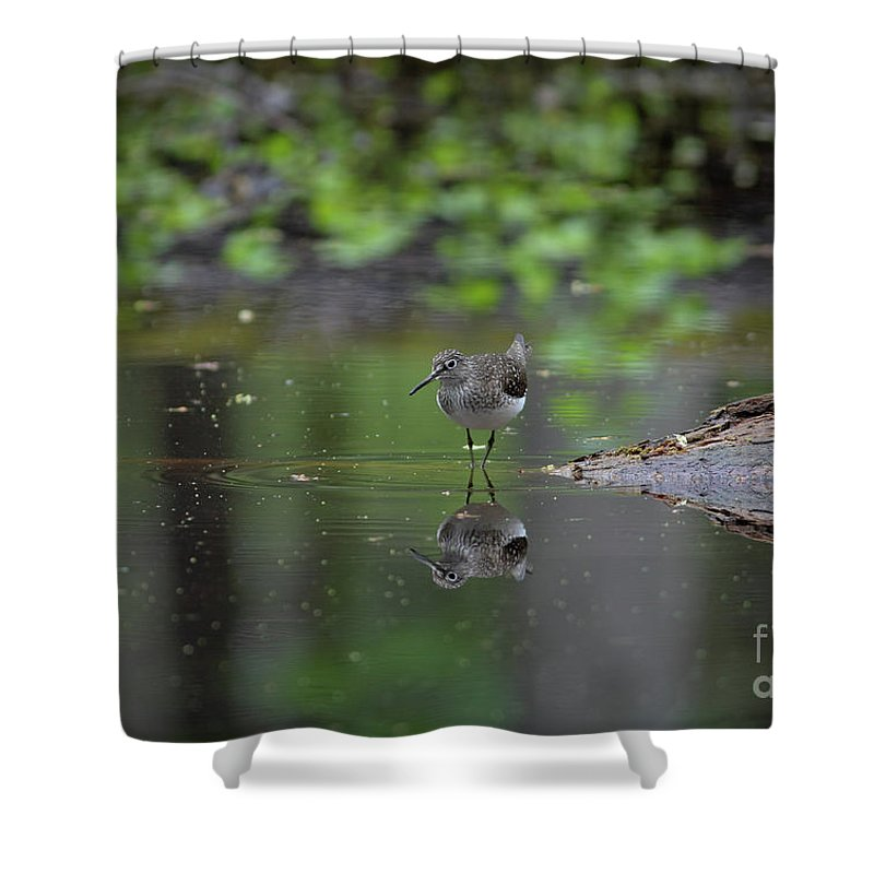 Sandpiper Shower Curtain featuring the photograph Sandpiper In The Smokies by Douglas Stucky