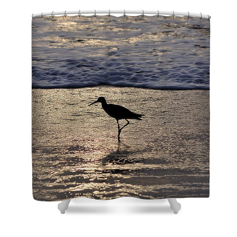 Sandpiper Shower Curtain featuring the photograph Sandpiper On A Golden Beach by Kenneth Albin