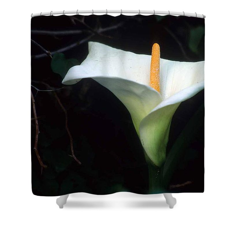 Lilly Shower Curtain featuring the photograph Sandra's Lilly II by Laurie Paci