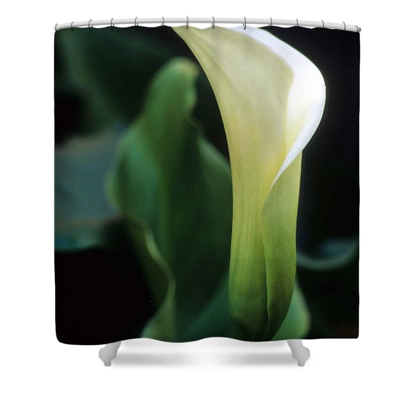 Cala Lilly Shower Curtain featuring the photograph Sandra's Lilly IIi by Laurie Paci