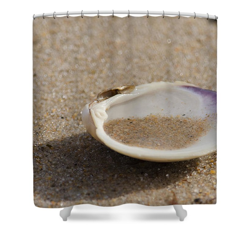 Beach Shower Curtain featuring the photograph Sandy Dish by Neil Taitel