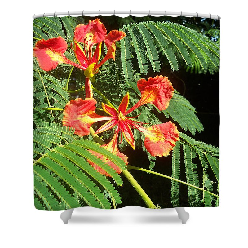 Florida Shower Curtain featuring the photograph Sanguine Serenity IIi by Chris Andruskiewicz