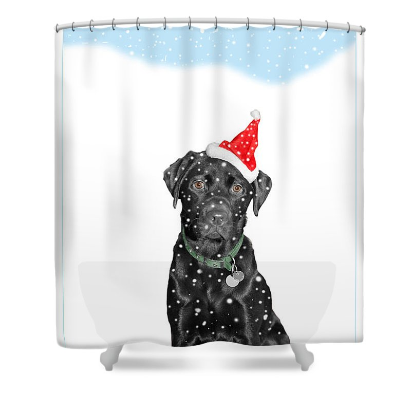 Christmas Shower Curtain featuring the photograph Santa Dog In The Snow by Mal Bray