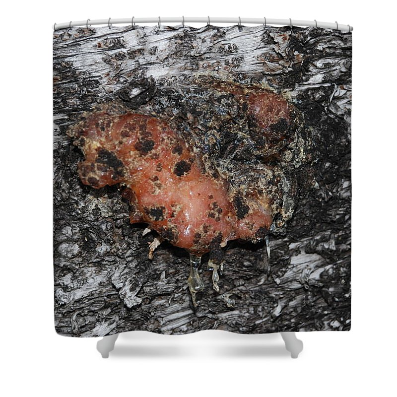 Sap Shower Curtain featuring the photograph Sap Of The Tree by Rob Hans