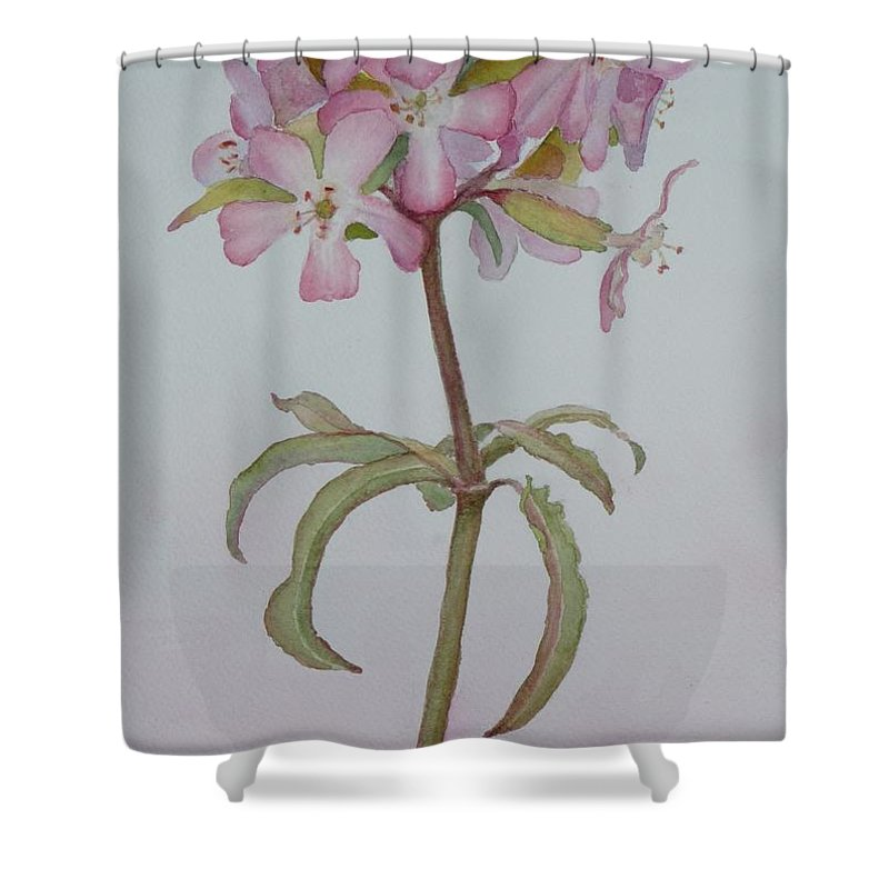 Flower Shower Curtain featuring the painting Saponaria by Ruth Kamenev