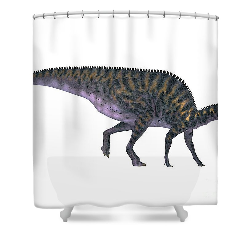 Saurolophus Shower Curtain featuring the painting Saurolophus On White by Corey Ford