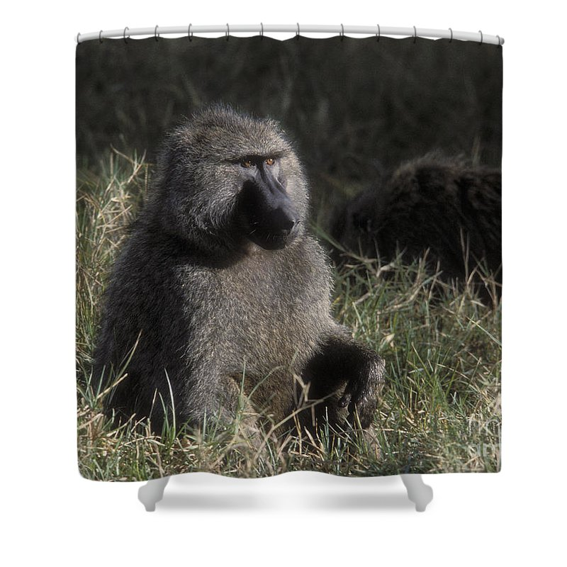 Baboon Shower Curtain featuring the photograph Savannah Olive Baboon by Sandra Bronstein