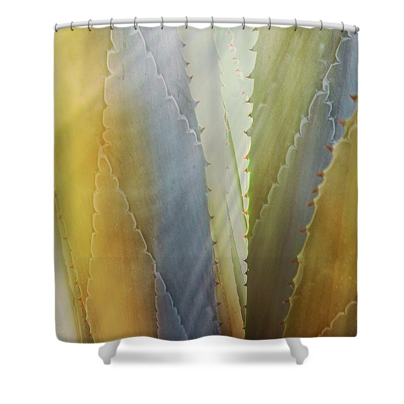 Nature Shower Curtain featuring the photograph Sawtooth Agave Gold Light by Zayne Diamond Photographic