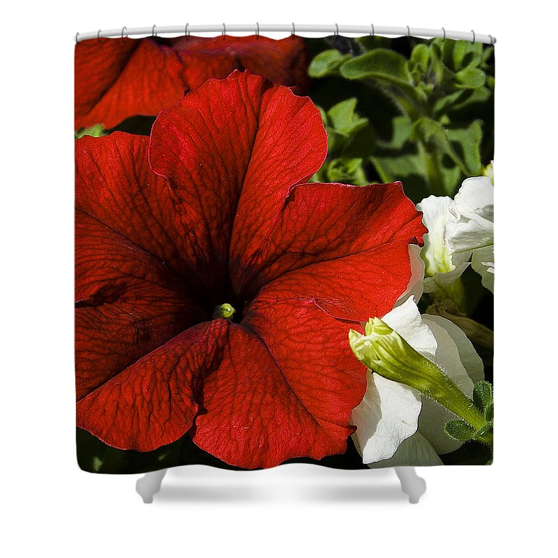Floral Shower Curtain featuring the photograph Scarlet Burst by David Patterson
