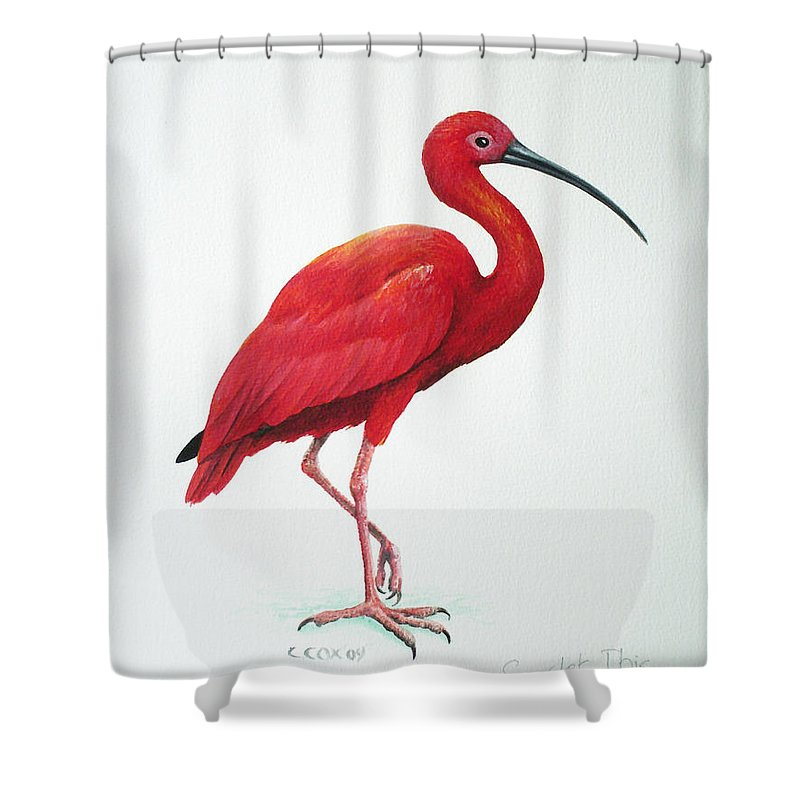 Scarlet Ibis Shower Curtain featuring the painting Scarlet Ibis by Christopher Cox