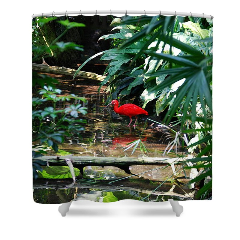 Scarlet Ibis Shower Curtain featuring the photograph Scarlet Ibis by Eric Liller