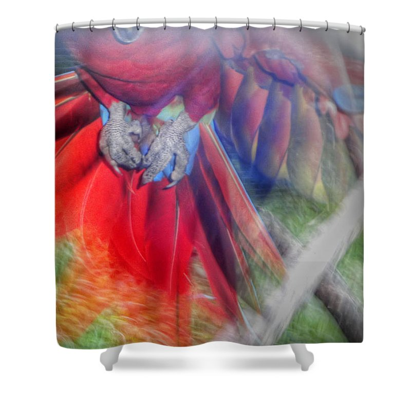 Scarlet Macaw Shower Curtain featuring the photograph Scarlet In Flight by Dolly Sanchez